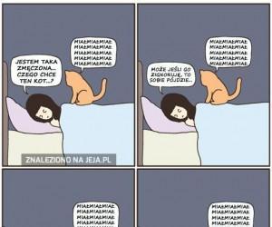 Właściciele kotów na pewno to znają...