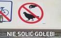 Nie solić gołębi