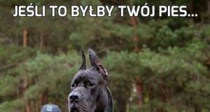 Jeśli to byłby Twój pies...