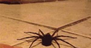 Przestraszony pajączek