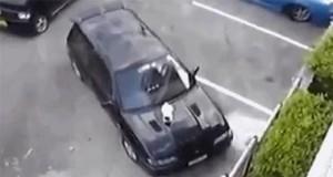 Jak przegonić kota z maski samochodu