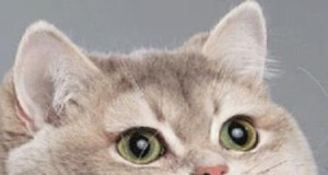Kiedy widzę w internecie zdjęcia jedzenia