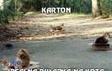Karton - idealna pułapka na kota