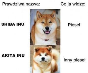 Rodzaje piesełów