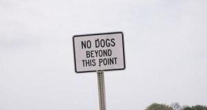 Pies trollujący zakaz