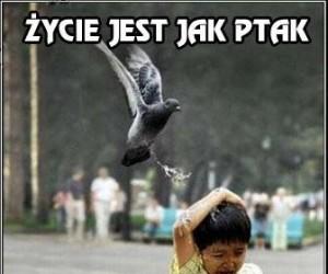 W sumie życie jest jak ptaki