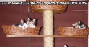 Kiedy miałaś skończyć z przygarnianiem kotów