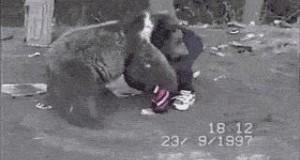 Dziecko kontra niedźwiedź