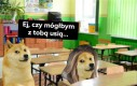 Pies na baby