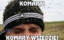 Komary!