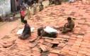Grupa lampartów na dachu prysnęła na widok kociaka
