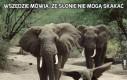 Wszędzie mówią, że słonie nie mogą skakać