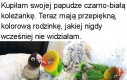 Ładne te papużki