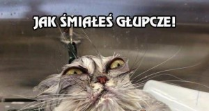 Bardzo, bardzo zły kotek