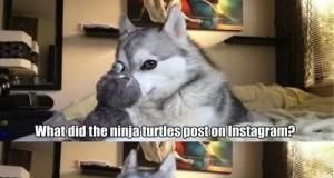 Gdy żółwie robią selfie