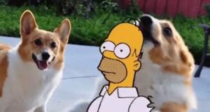 Kiedy jesteś na imprezie z ludźmi, których nie lubisz i zobaczysz psa