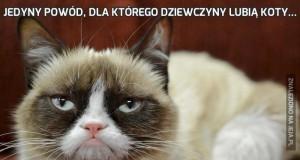 Jedyny powód, dla którego dziewczyny lubią koty...