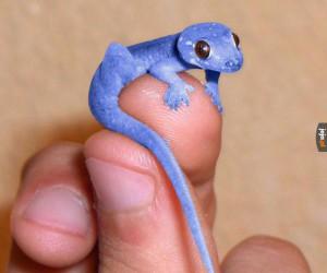 Miniaturowy gekon