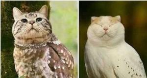 Kotosowy