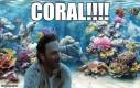 Coral, gdzie jesteś?!
