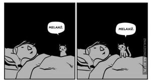 Nocne życie kotów