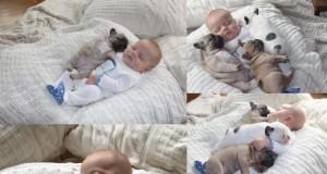 Spokojny sen z żywymi przytulankami