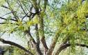 Drzewo i płot