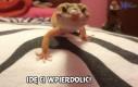 Jaszczurka idzie Ci...