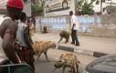 Zwierzęta na smyczy