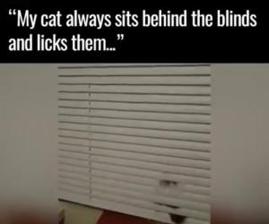 Kot, który siedzi za oknem i liże żaluzje