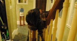 Kot zawsze znajdzie sobie miejsce dla siebie