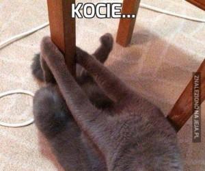 Kocie...