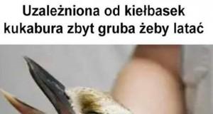 Biedny ptaszek...
