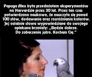 Taka wzruszająca papuga...