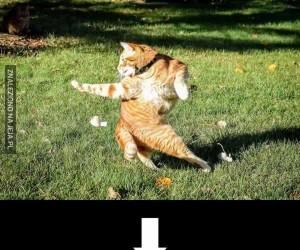 Kot wpadł w sidła internetowych przeróbek