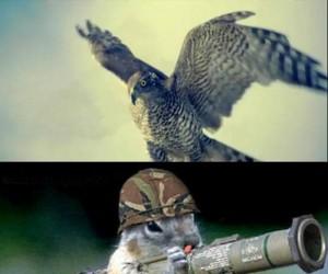 Wiewiórka ziemia-powietrze
