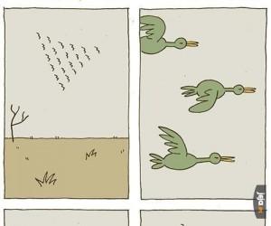 Ptaki latają kotem
