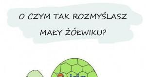 O czym tak rozmyślasz mały żółwiku?