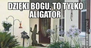Uf, to tylko aligator
