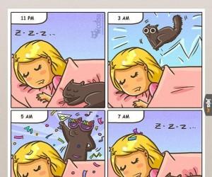 Koty są szalone
