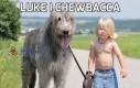 Luke i Chewbacca