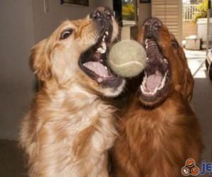 Jedna piłka a tyle radości