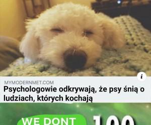 Nie zasługujemy na psy
