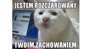 Rozczarowany kot