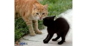 Cześć, mały kocie