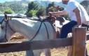 Jestę kowboję