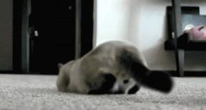 Koteły są wszędzie...