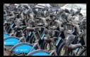 Bezpłatne miejskie rowery