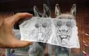 Papier + zdjęcie - osły