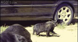 Psy rozdzieliły walczące koty